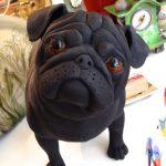 Black Pug (2)