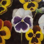 The Pansy Study
