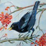 Blackbird in Rowan Tree
