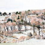 Winter Morning Galloway