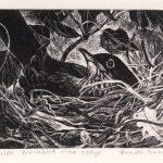 Blackbird in the Hedge